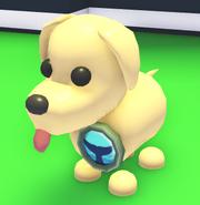 Beaked Whale Badge on a Dog