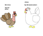 A Turkey and a Chicken