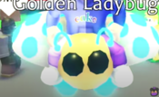Golden Ladybug