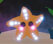 Neon Starfish