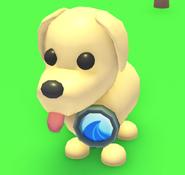Wave Badge on a Dog