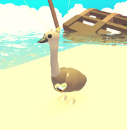 Emu wearing a pin