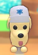 White Winter Hat on Dog