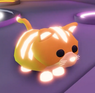 Neon Ginger Cat