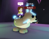 Neon Lynx