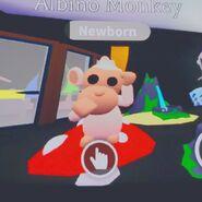 AM Albino Monkey