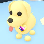 Dog wearing a Genderfluid Pride Pin