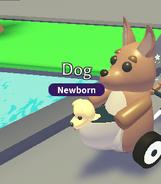 A dog in the Kangaroo Stroller
