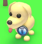 WDC Badge on a Dog