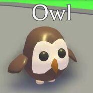 Owl Adopt Me!