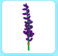 Lavender Bundle in a Player's Inventory