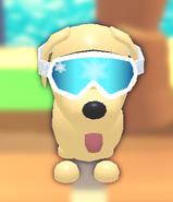 Ski Goggles on a Dog