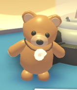 Shell Necklace on a Brown Bear