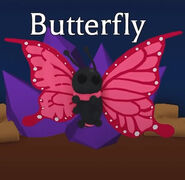 Teaser photo of the Butterfly