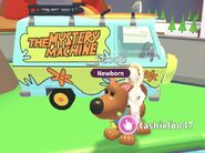 Scoob and The Mystery Machine
