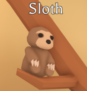 Sloth on display in the Pet Shop