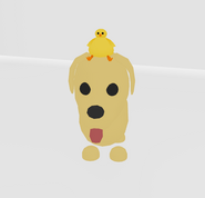 Dog with chick hatt