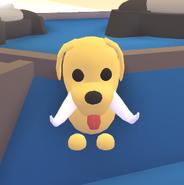 Tusks on a Dog