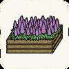 Garden Flowers LavenderBush.png