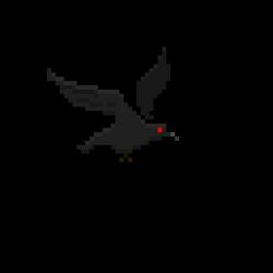 Crow 012.png
