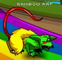 Rainbowrat