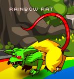Rainbow Rat1