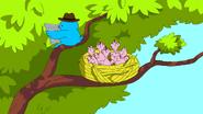 S6e12 Birds in nest