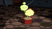 Dimpleplant6