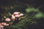 Mushroom Cottagecore