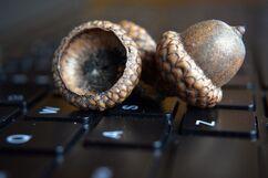 Nut-laptop-keyboard