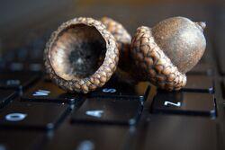 Nut-laptop-keyboard.jpg