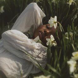 Cottagecore Daffodil Flowers.jpeg