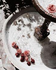 Rose-fountain