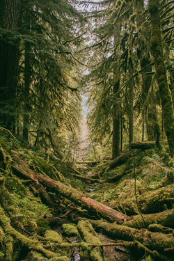 Mossy forest.webp