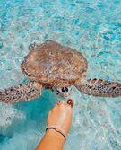 Seacore turtle