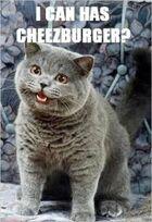 Can i has cheeseburger