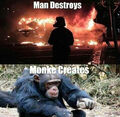 Monky creates