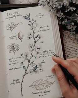 Natura Philosophy Journal2.jpeg