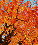 Autumn VSCO 5