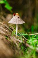 Cutemushroompic3