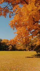 Autumn VSCO 3