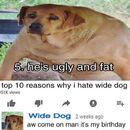Wide dog