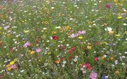 Colourful, dainty flowers clutter the grassy meadow, while the sun shines brightly overhead.