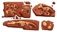 Kid science fossils
