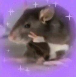 Rat peace.jpg