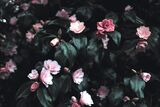Bubblegum Witch-Dark Pink Roses and Leaves