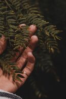 Person Holding a Fern