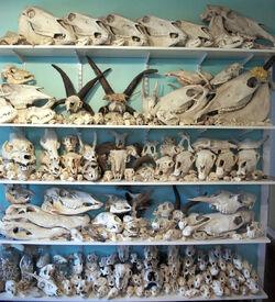 Skull-wall.jpg