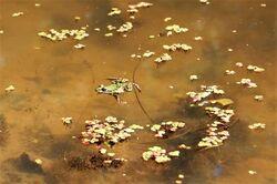 Frog bog.jpg