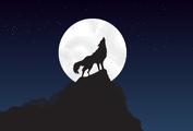 Wolf-4561204 1280